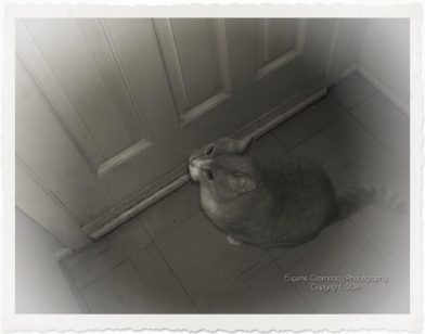 Moosie waits near door for his leave.