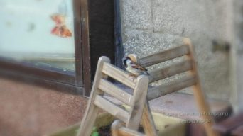 Extra, extra little bird on old chair