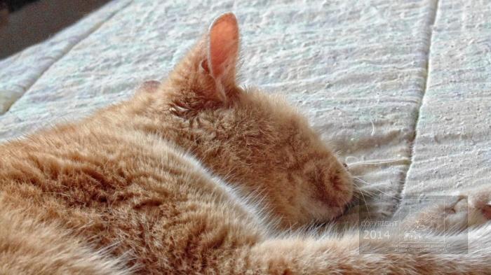 sleeping cat precludes awaking to new dawn