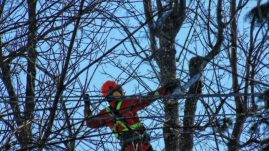 Tree trimmer in a moment in time.