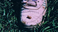 Scale is obvious with this little fellow and the shoe.