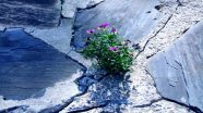 Tiny forces of nature like these little purple-yellow flowers are everywhere.