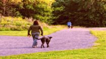 """Walking the """"dawg""""ensures strong cardiovascular system and cognitive responses."""