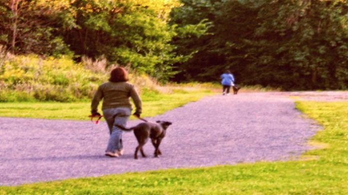 "Walking the ""dawg""ensures strong cardiovascular system and cognitive responses."