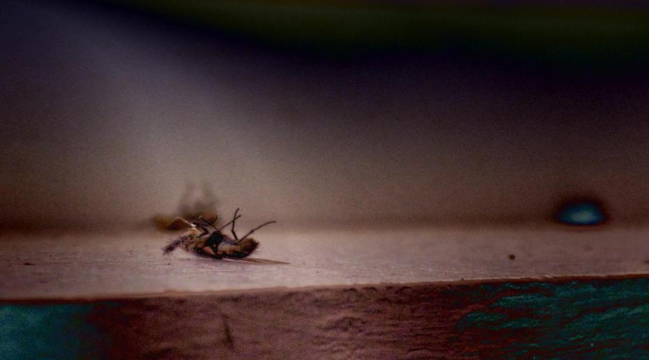 Legs up dead flies is current image for global financial markets meltdown.