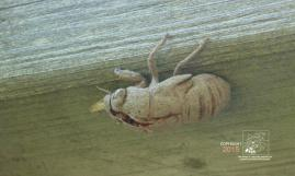Now out of his shell cicada Ralph moment in sun was gone.