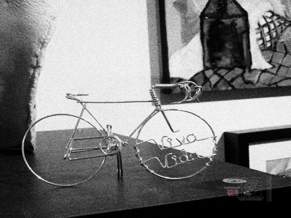 Viva Vida Velo perched on display case.