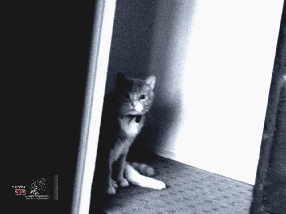 Feline anticipation by the moosh awaiting his master at around 5 AM to let him outside.