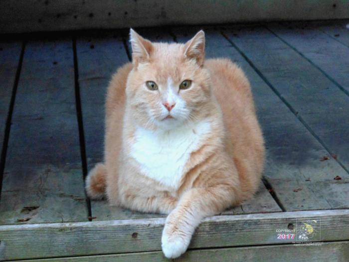 Dearly departed friend Mooshie, our orange tabby, loved strategically positioning himself to observe what's going on in back yard.