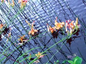 Breeze skims pond water creates ripples and overhanging lilies cause squiggly reflecting long shadows on sunlit blue surface.