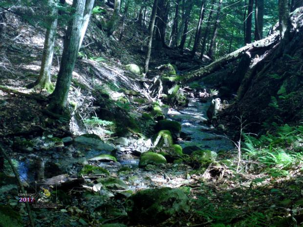 Shallow fresh water stream in Eastern townships mountains forest, whose water source is deep in huge rock formation.