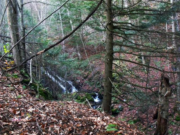 Townships mini gorge stream emanated an almost deafening roar the closer I got to it descending down hill.