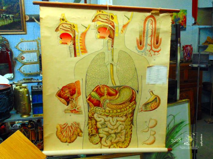Old fabric anatomy chart, probably from a medical doctor's office, an old relic found in flea-market.