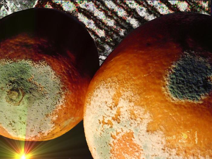 Photo edited moldy grapefruits are a couple out of this world huge red planets in deep space.