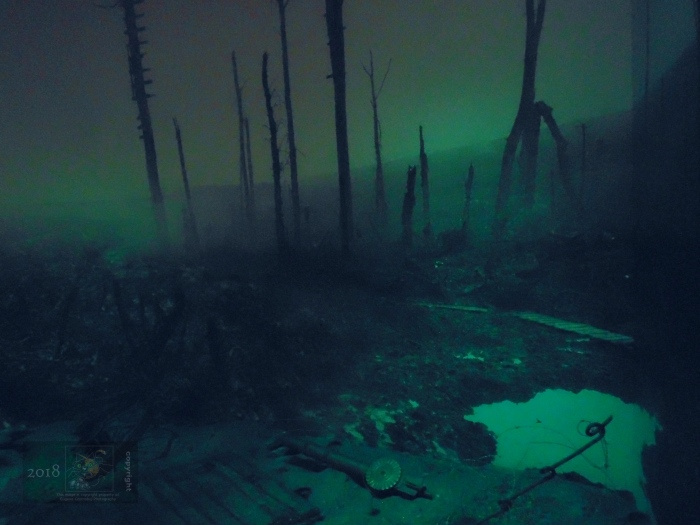 Barely luminescent area after WWI battle scene shows burnt forest trees,   pock-holes, dead, and war debris.