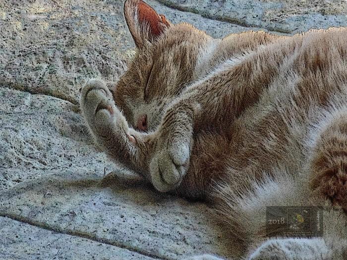Mooshy cat definitely not awakening preferring comfortable sleep on bed.