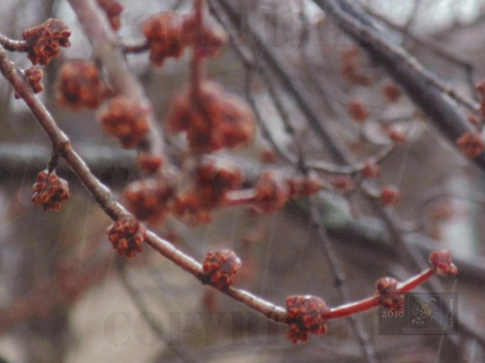 Overwhelmed by Mother Nature's prolonged, intensely cold winter with freezing rain is enough for a temper tandrum.