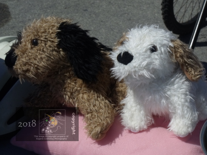 Two little, uncertain ,unknown pedigree puppies that look like Terriers are instead stuffed animals.