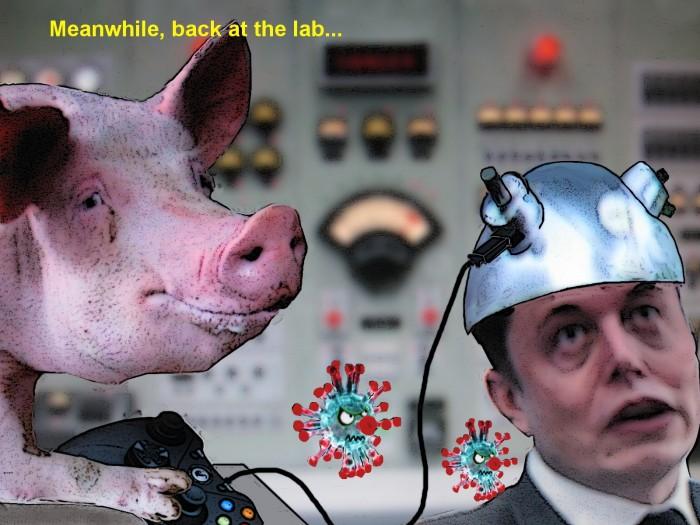 Pig Controls Elon